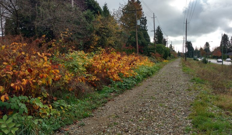 Tranquil urban exploration along former Arbutus railbed/Naomi Reichstein photo