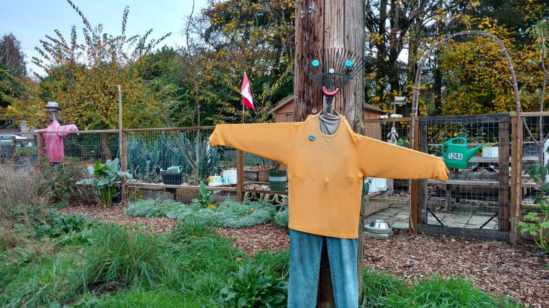 Scarecrow at an urban farm in Kerrisdale along the Arbutus Greenway, Vancouver/Naomi Reichstein photo