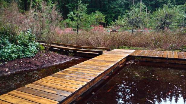 Without guardrails, the new boardwalk allows close observation of life at the water/Naomi Reichstein photo