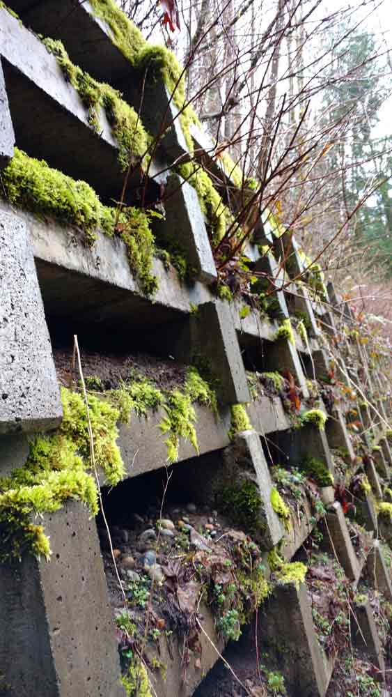 Retaining wall on the Interurban, greened with moss and sedum/Naomi Reichstein photo