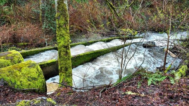 Salmon ladder on Padden Creek/Naomi Reichstein photo