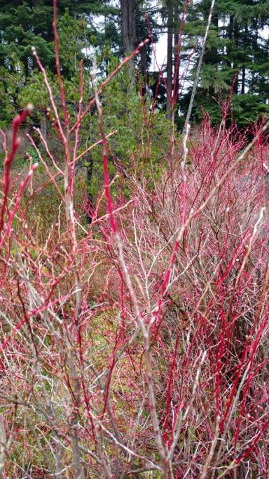 Early spring colors at the Camosun Bog/Naomi Reichstein photo