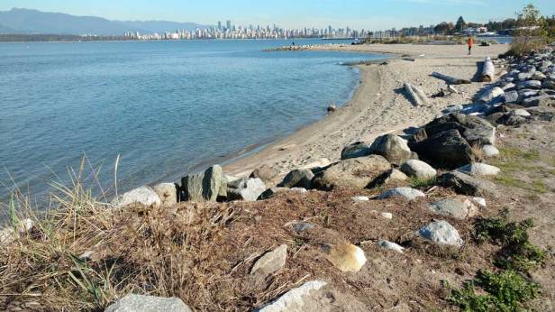 Human and natural communities meeting on the Vancouver shoreline/Naomi Reichstein photo
